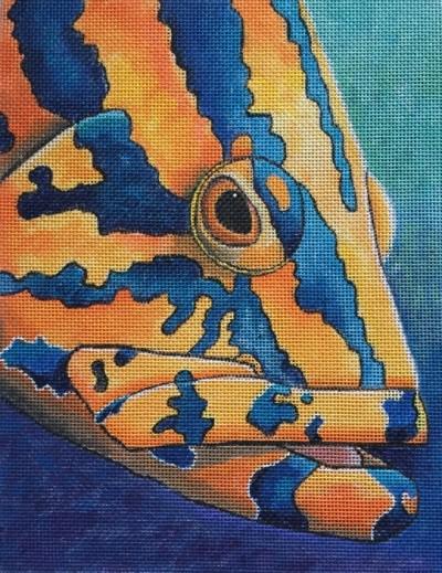 615-nassau-grouper-np